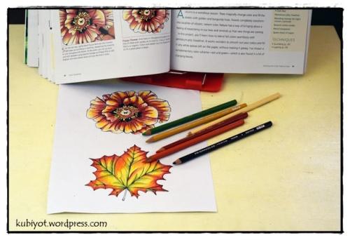 צביעה יצירתית למבוגרים, Color Workshop